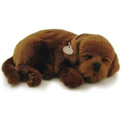 Perfect Petzzz soft Chocolate Labrador
