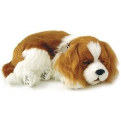 Perfect Petzzz soft Cavalier King Charles
